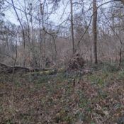 Vexin Forest